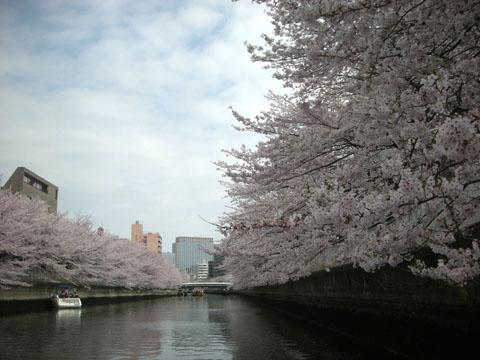 4.お花見.JPG