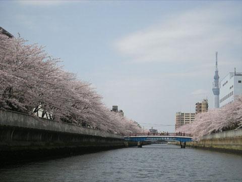 5.お花見.JPG