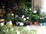 異常に安い花屋